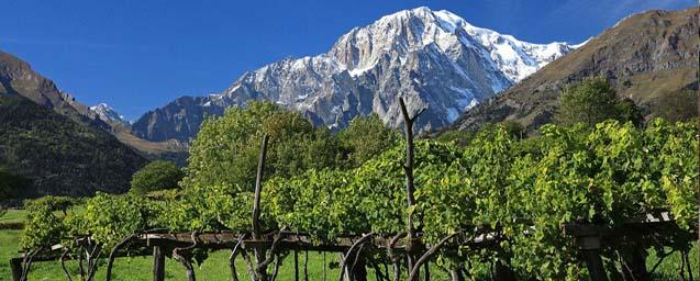 Valle d'Aosta-Monte-Bianco-Vigneti